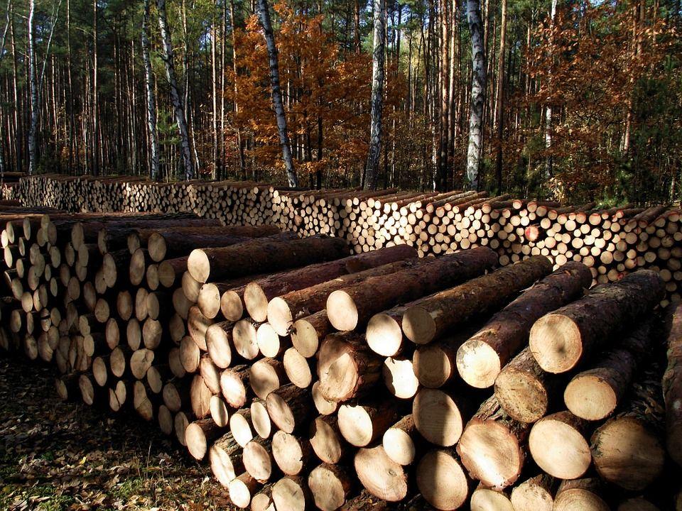 Materiál ktorý nepatrí dokrbu - mokré drevo